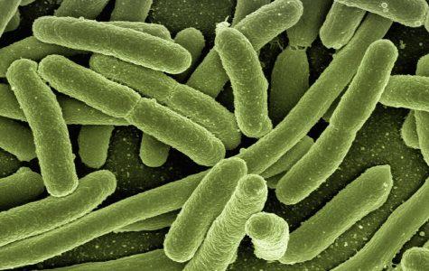 Antibiotic-Resistant Superbugs