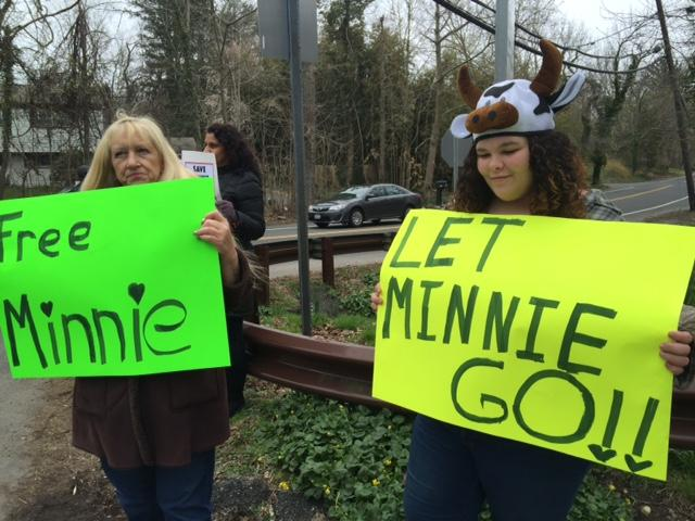 Community Members Rally to Save Minnie the Cow