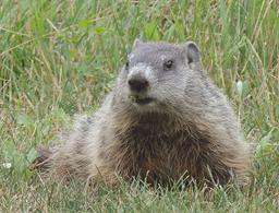 Groundhog Day 2017