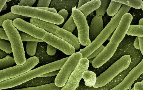 Antibiotic-Resistant Superbugs