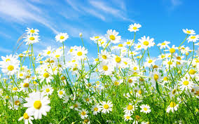 Spring Appreciation Day